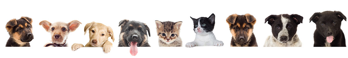 Professional pet services st albans