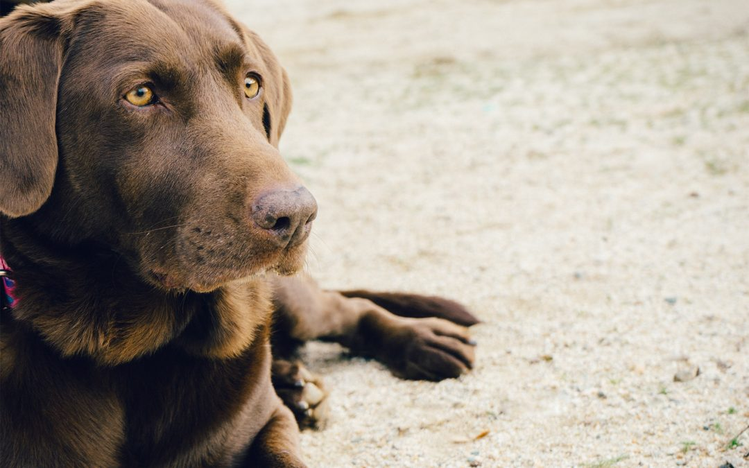 Dog training and behaviour. What is positive reinforcement?