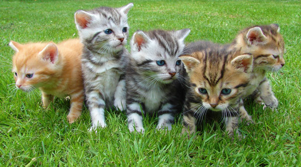 Kittens / Cats sitting on the grass