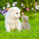 Small white puppy and kitten sitting on the grass