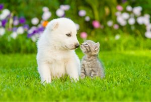 White fluffy dog sitting next to a kitten on the grass