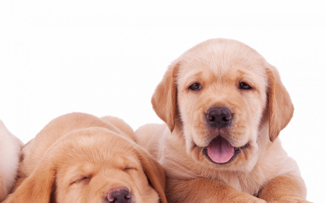 Puppy Training – how to prevent problem behaviour with your puppy