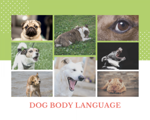 Dog body language signs including a pugs face, growling, a Shar Pei's face, a dog yawning,