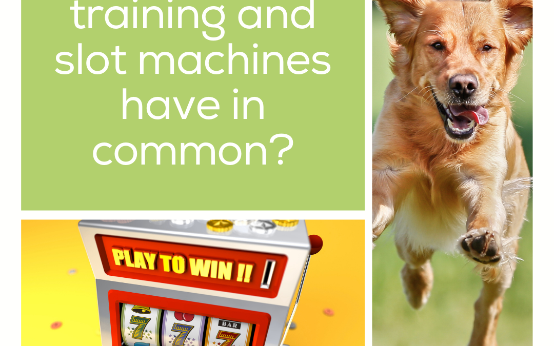 What do dog training and slot machines have in common?