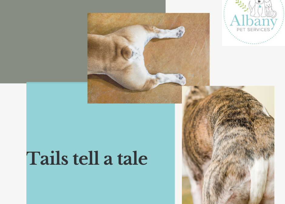 What's in a tail wag?