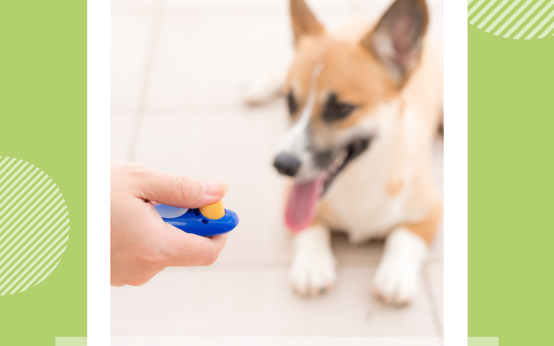 What is clicker training and how is it helpful when training our dogs and cats?